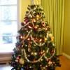 今年のヘアのトレンドを「クリスマスツリー」に取り入れてみた結果。