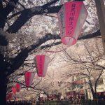 中目黒の桜は満開です。花見ついでに是非!
